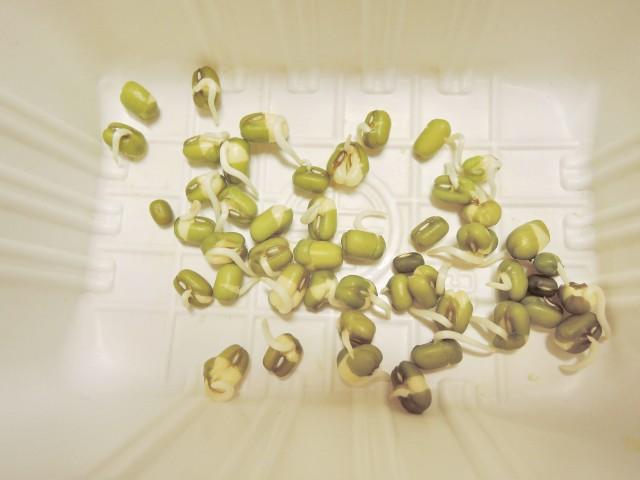 105綠豆生命週期05