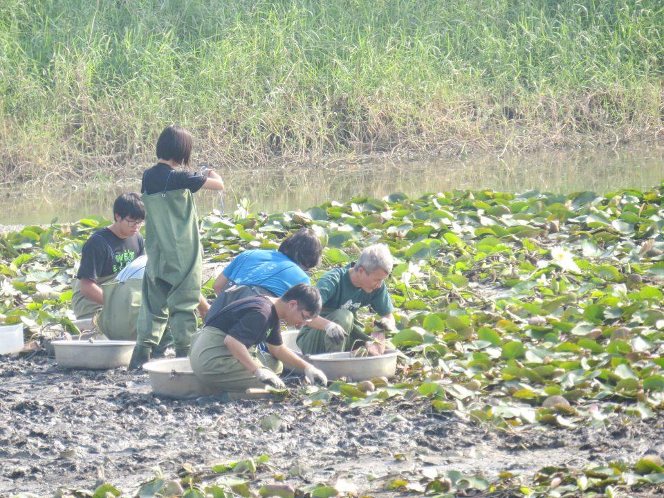 105菱角鳥水雉大調查32