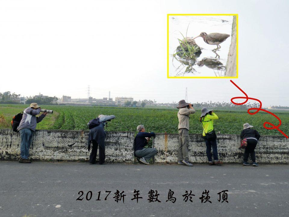 106新年數鳥-崁頂00