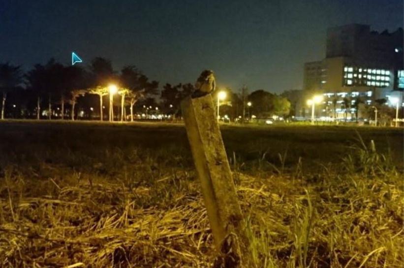 106夜鶯-蘇醫師
