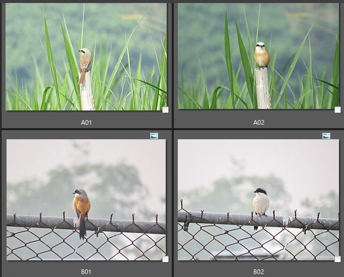 106新年數鳥-屏科大21