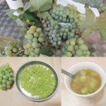 104金香葡萄
