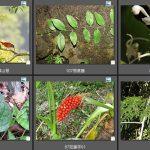 106太魯閣國家公園植物(0)