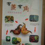 2008菱角解說海報展