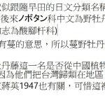 109台灣野牡丹藤