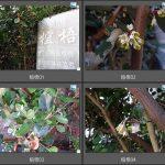 102 宜梧(NPUST校園植物)