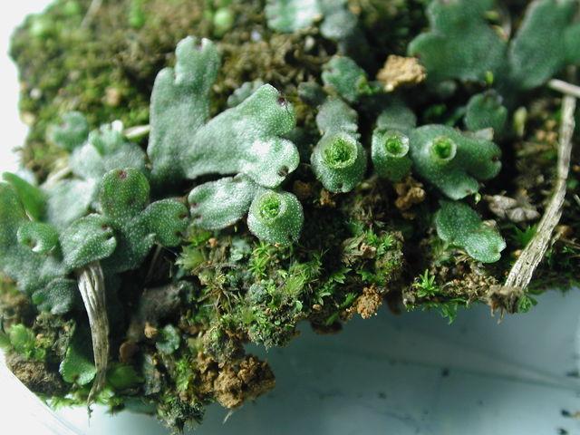苔藓與蕨類