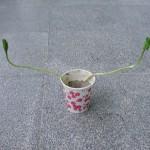 seedling 小苗解答