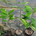 seedling--屏科大森林苗圃