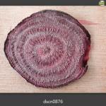 甜菜根(beet) 解剖構造