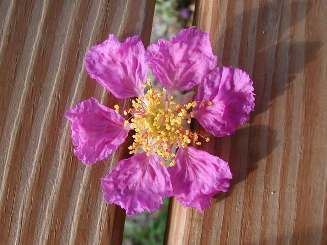 校園賞花---屏科大校園植物