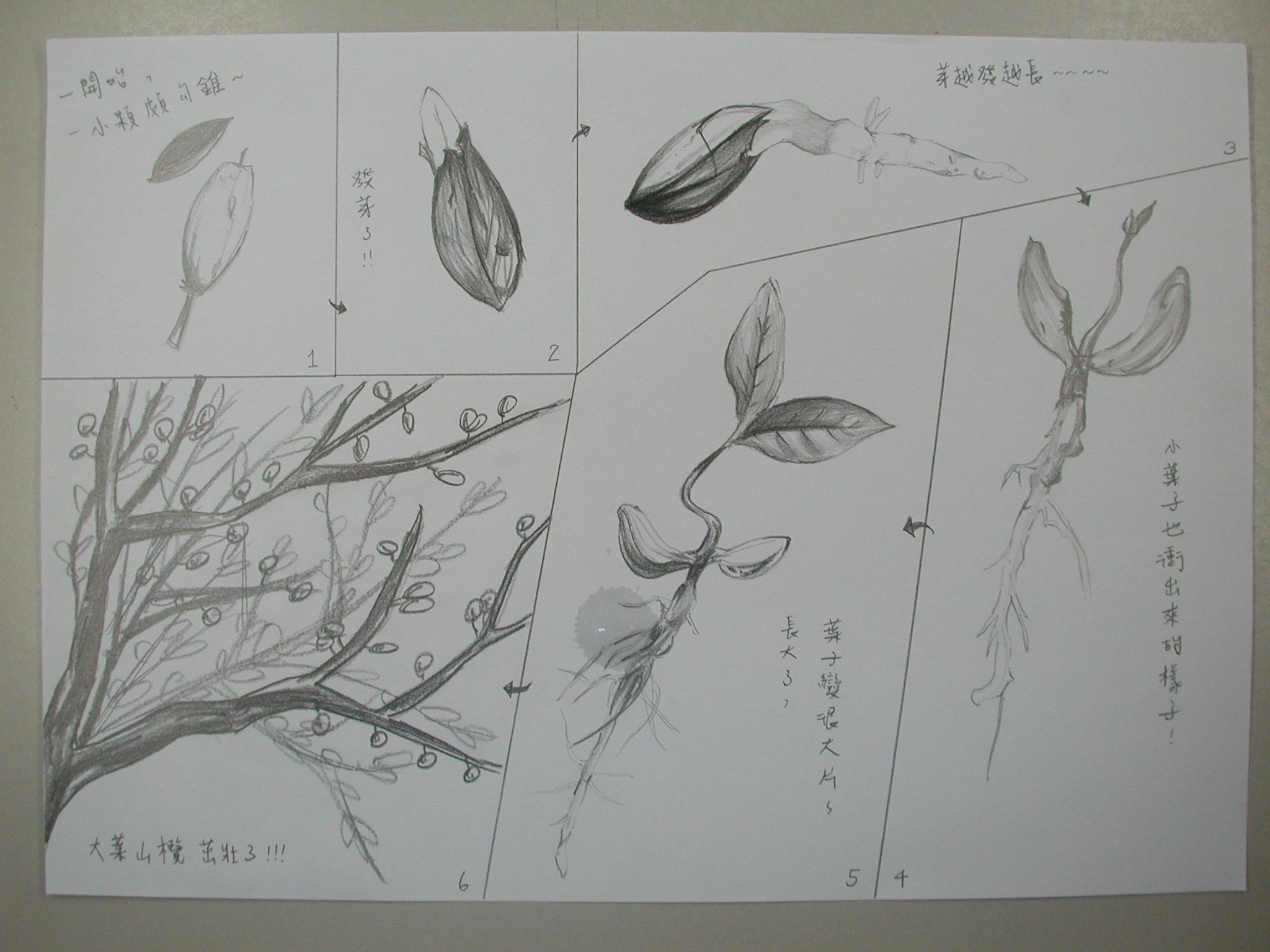 植物生长过程简笔画-木设一学生手绘植物发芽纪录 2 –从植物中学画