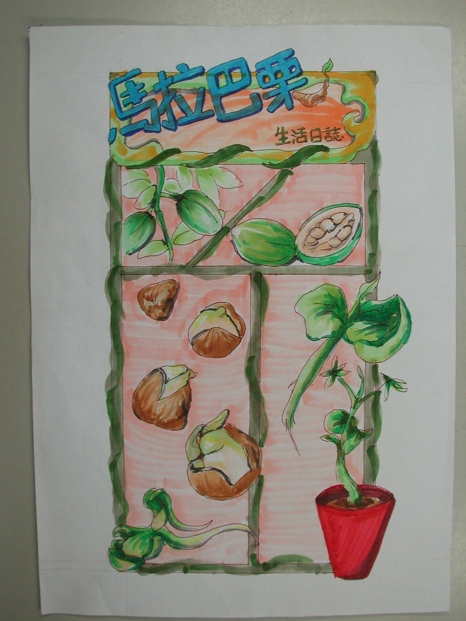 木设一学生手绘植物发芽纪录(2)–从植物中学画