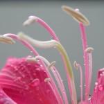 100花之構造