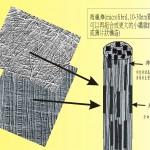 3D木材細胞組成作業