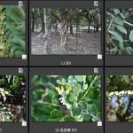 100新年鳥調 植物篇