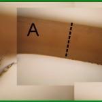 101禾本科花柱與柱頭