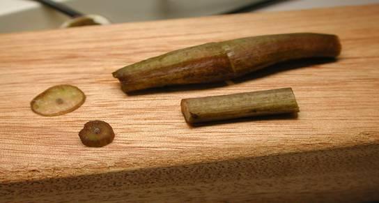 画芹菜叶柄横切面结构图
