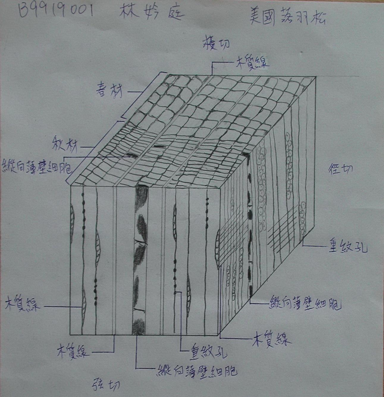 木材三切面立体组合练习(1b)–三切面组合作业