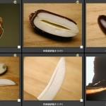 101掌葉蘋婆種子解剖構造