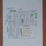 101美國鵝掌楸組織繪圖