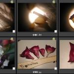 101蚌蘭-紫背萬年青
