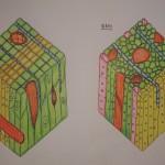 101 木材組織作業 01