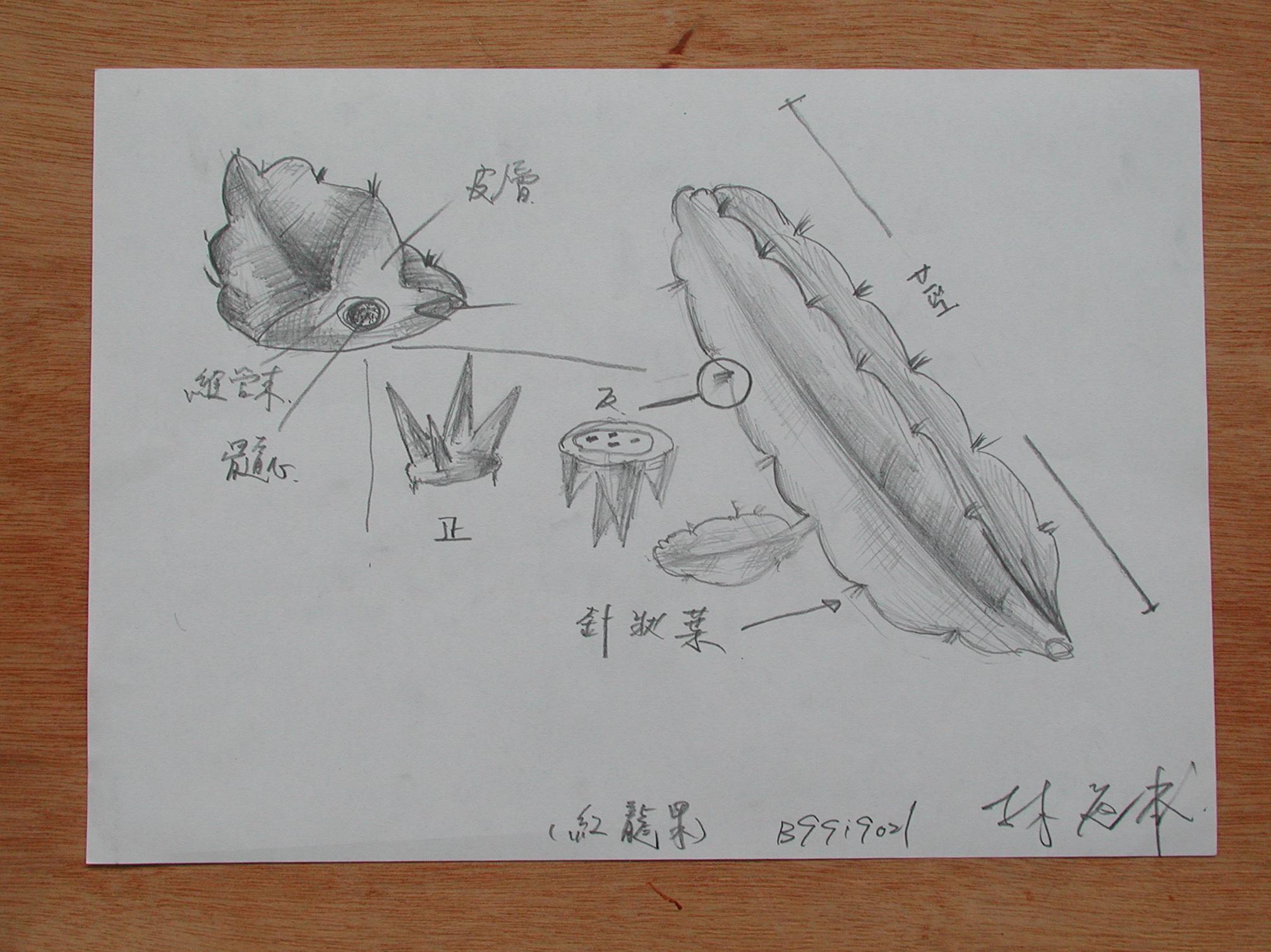 作业 b-仙人掌科