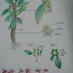 多肉植物作業A