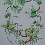 101 蕨類