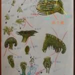 101 苔類 liverwort