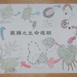 101 蕨類生活史繪圖