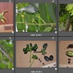 102 多雌蕊植物集合