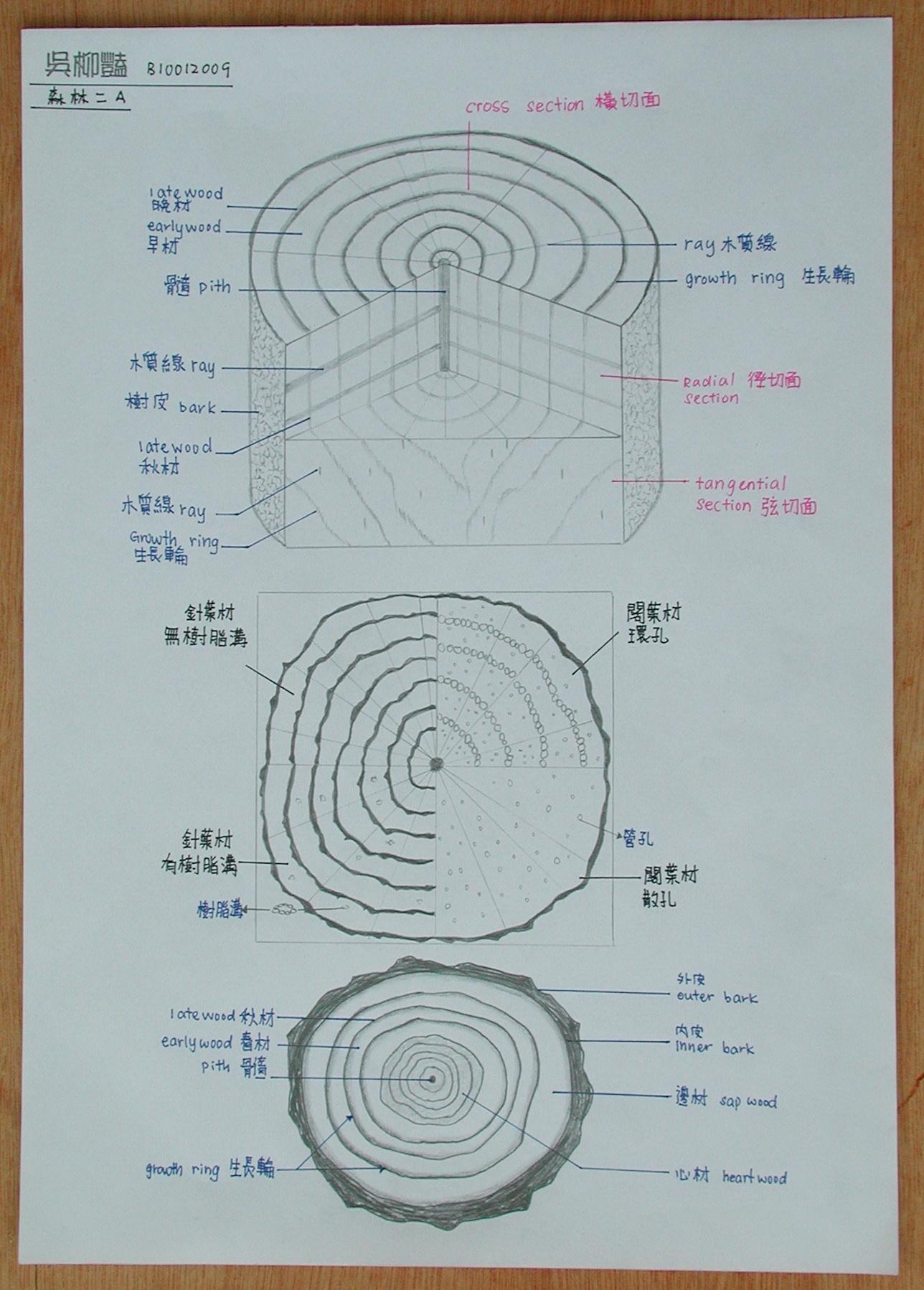 101木材的三切面绘图