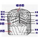 101 木材三切面繪圖