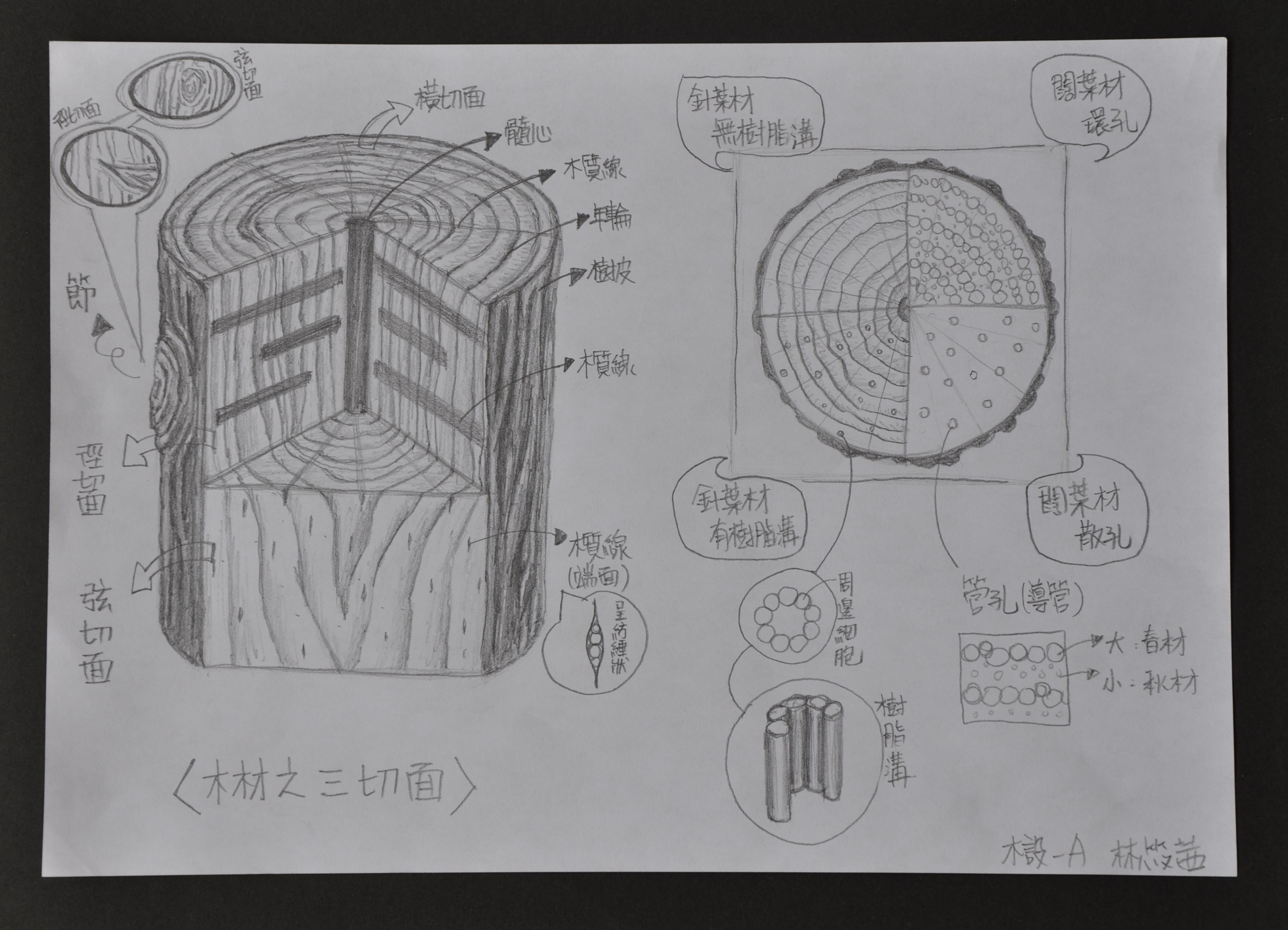 木材三切面  03-筱茜