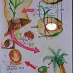 單子葉植物發芽解說圖繪製作業