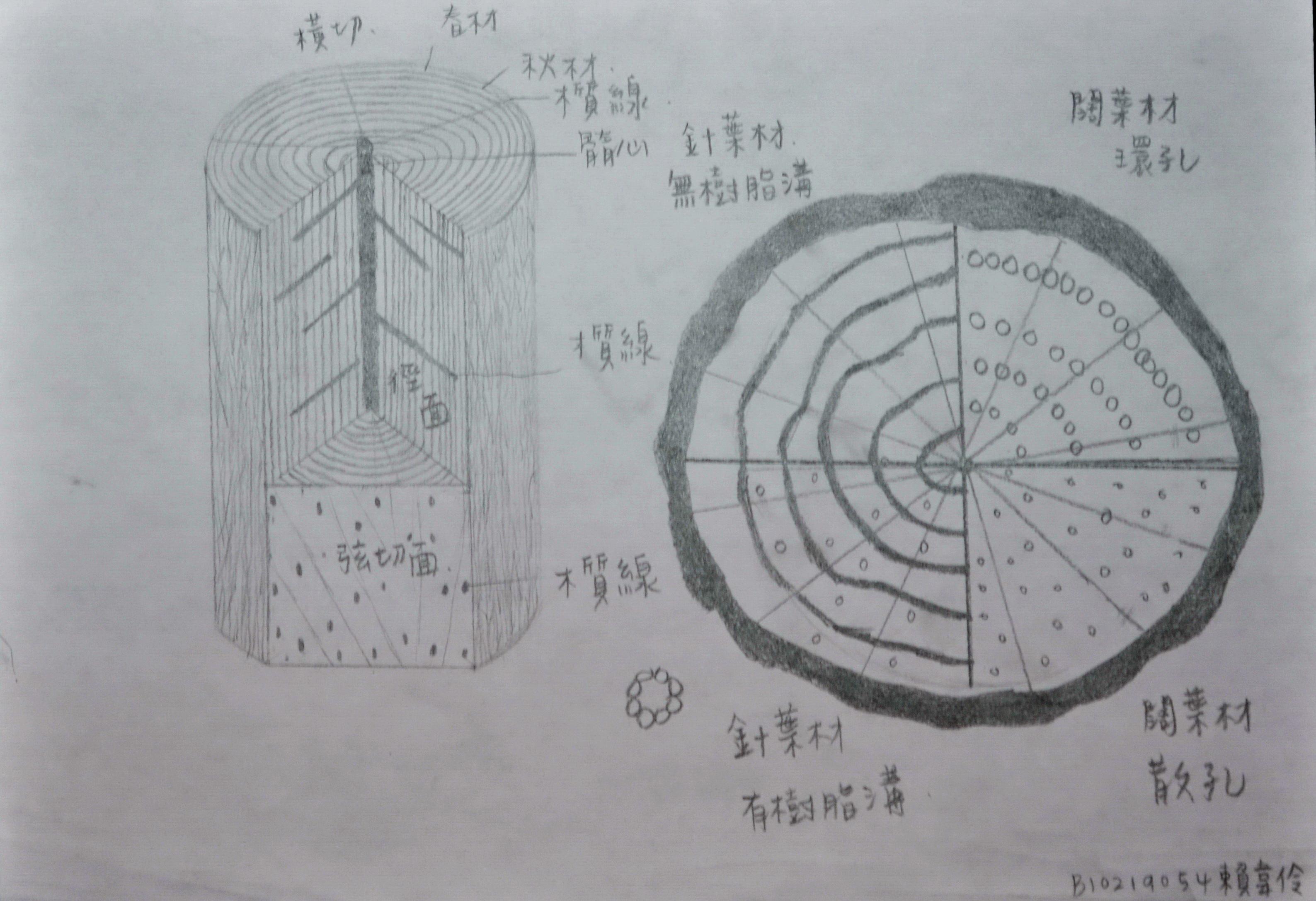 木材三切面  54-韦伶