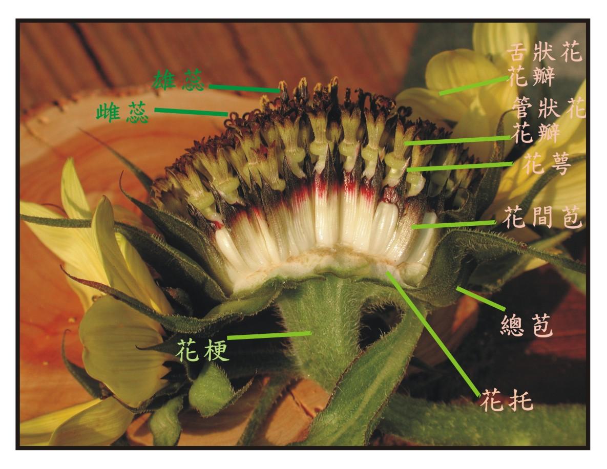 102專看特殊的花(B) 美食篇