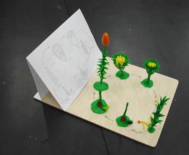苔類蘚類模型