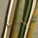 刺竹 Thorny Bamboo