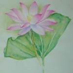 蓮 (或稱為荷) East Indian Lotus