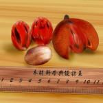 蘭嶼肉豆蔻果實(電腦繪圖)