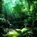 穿越翠綠的熱帶雨林溪谷