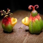 聖誕紅之雌花與雄花 Common Poinsettia(X'mas Flower)
