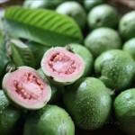 番石榴(品種:紅心芭樂) Guava