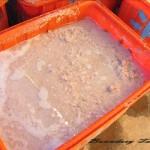 荷花(蓮花)-蓮藕粉製作過程 East indian lotus