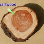 心材 heartwood