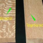徑切面 radial section