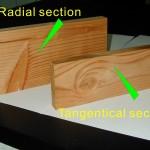 弦切面 tangential section